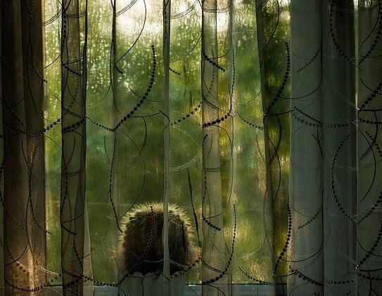 telas de cortina