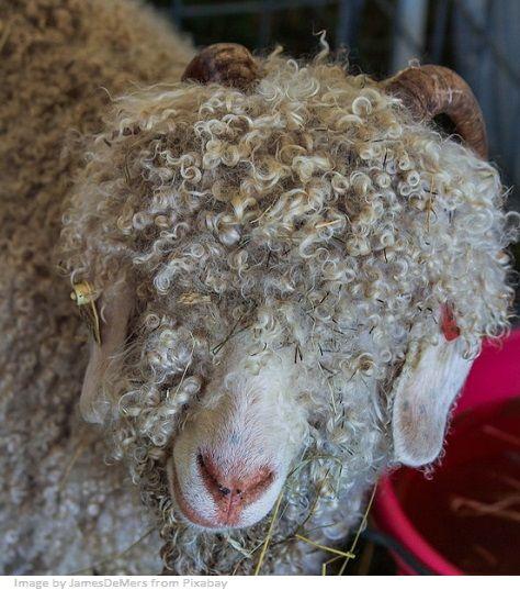 fibra textil animal